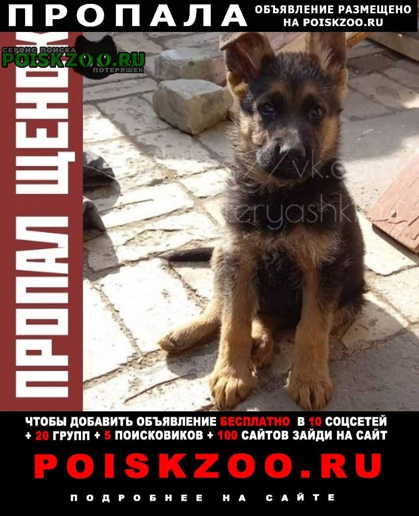 Пропала собака кобель щенок немец Саратов