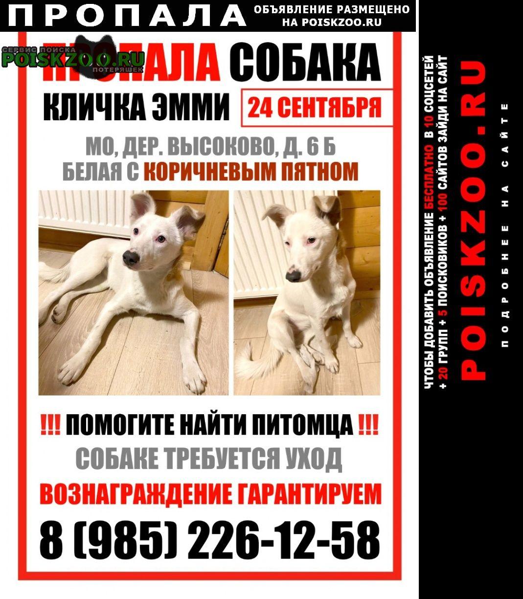 Пироговский Пропала собака