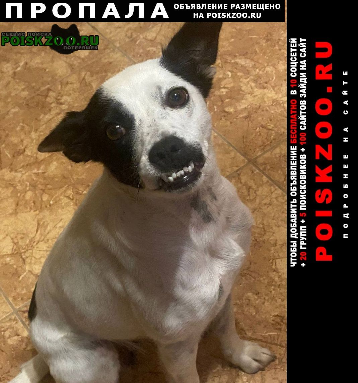 Пропала собака Бахчисарай