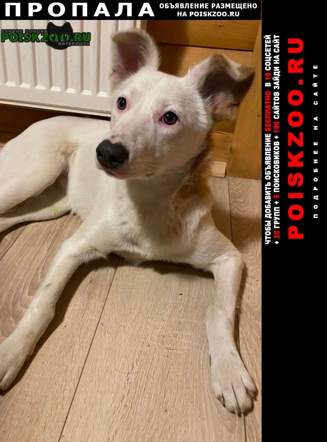 Пропала собака мытищи, пироговский лесопарк Москва