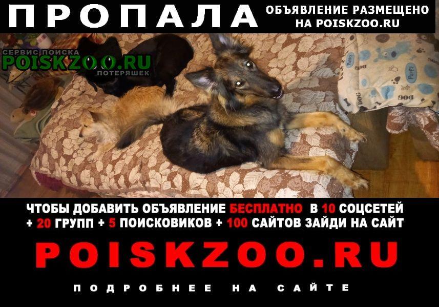 Калининград (Кенигсберг) Пропала собака помогите найти собаку
