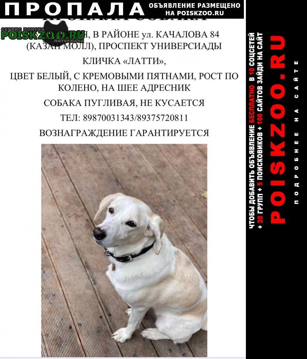 Казань Пропала собака просьба всем кто видел позвонить