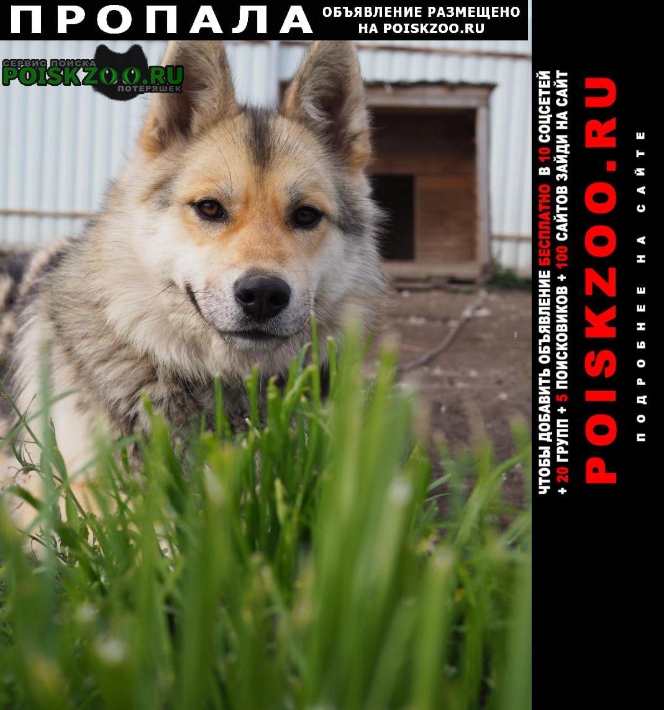 Пропала собака потерялась около деревни гостилово Воскресенск