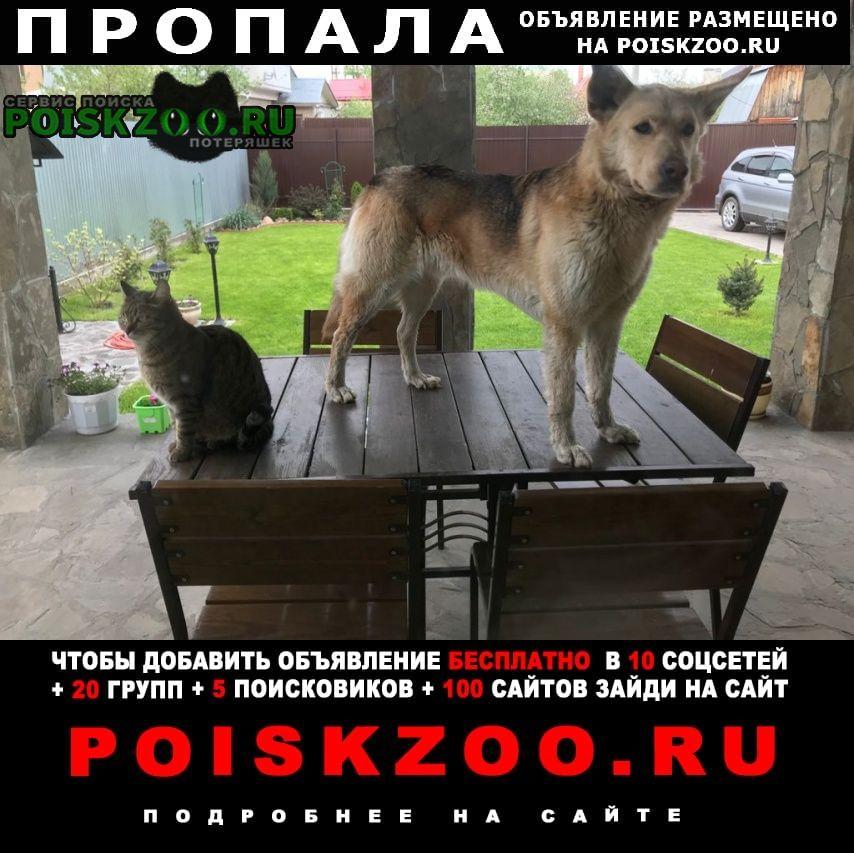 Пропала собака кобель Раменское