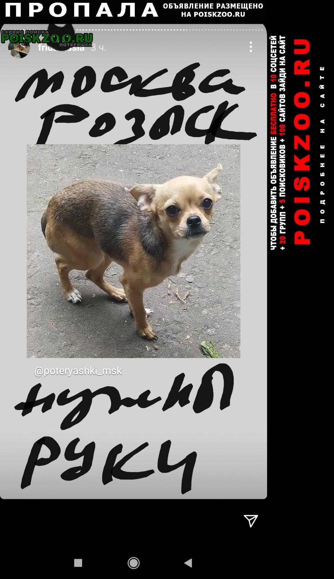 Пропала собака чихуа украдена Москва