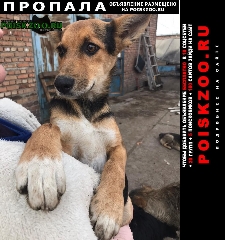 Красноярск Пропала собака