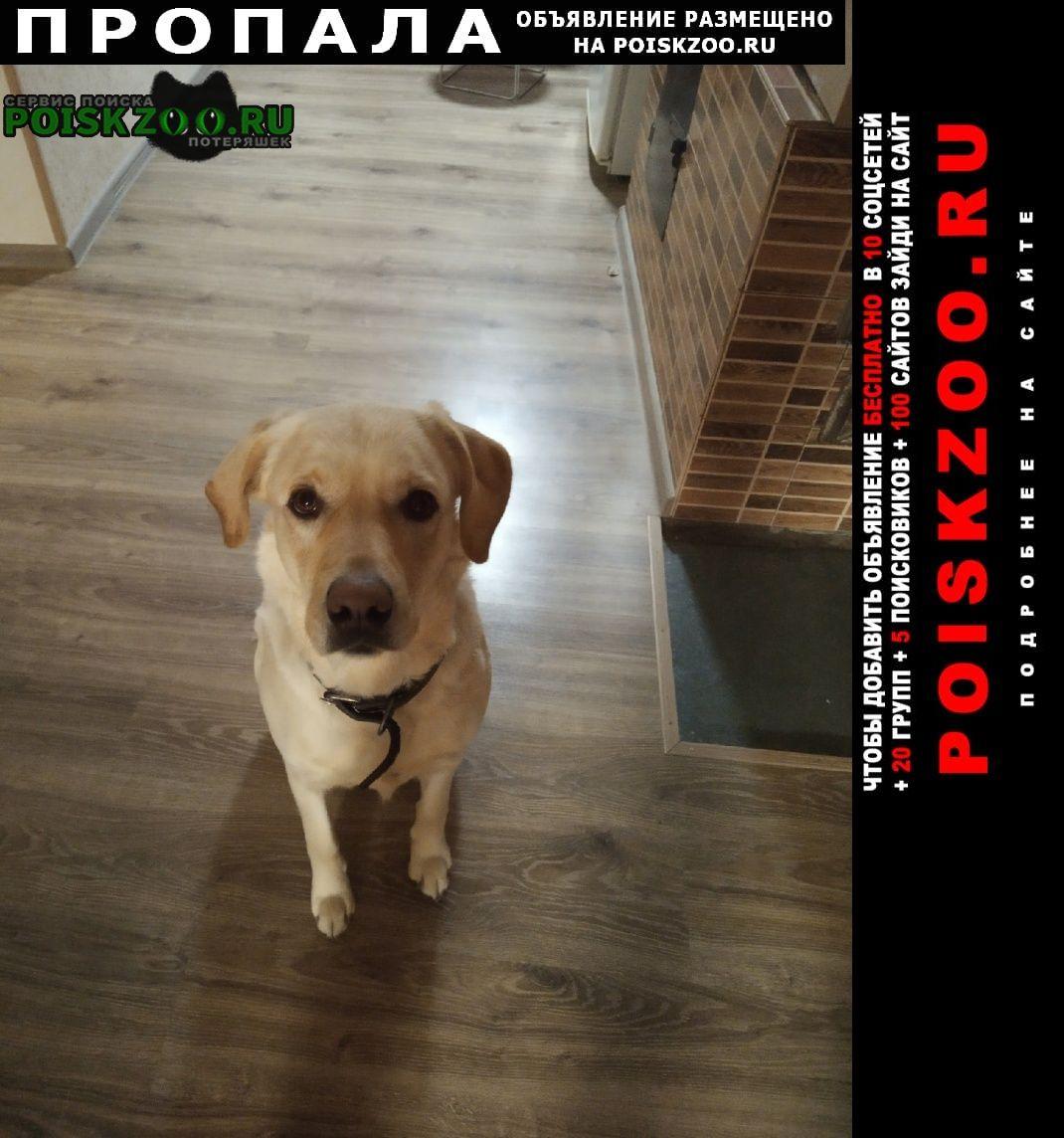 Белогорск Крым Пропала собака