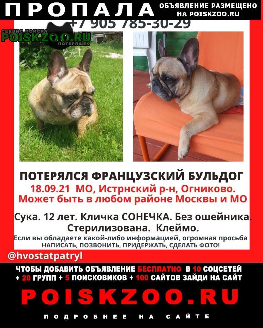 Пропала собака французский бульдог девочка Москва