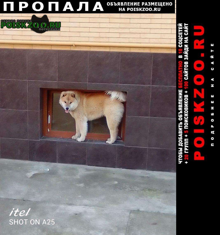 Пропала собака кобель пёс акита Армавир