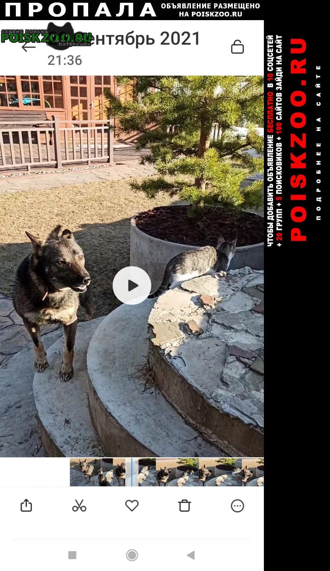 Пропала собака кобель и две собаки Серпухов