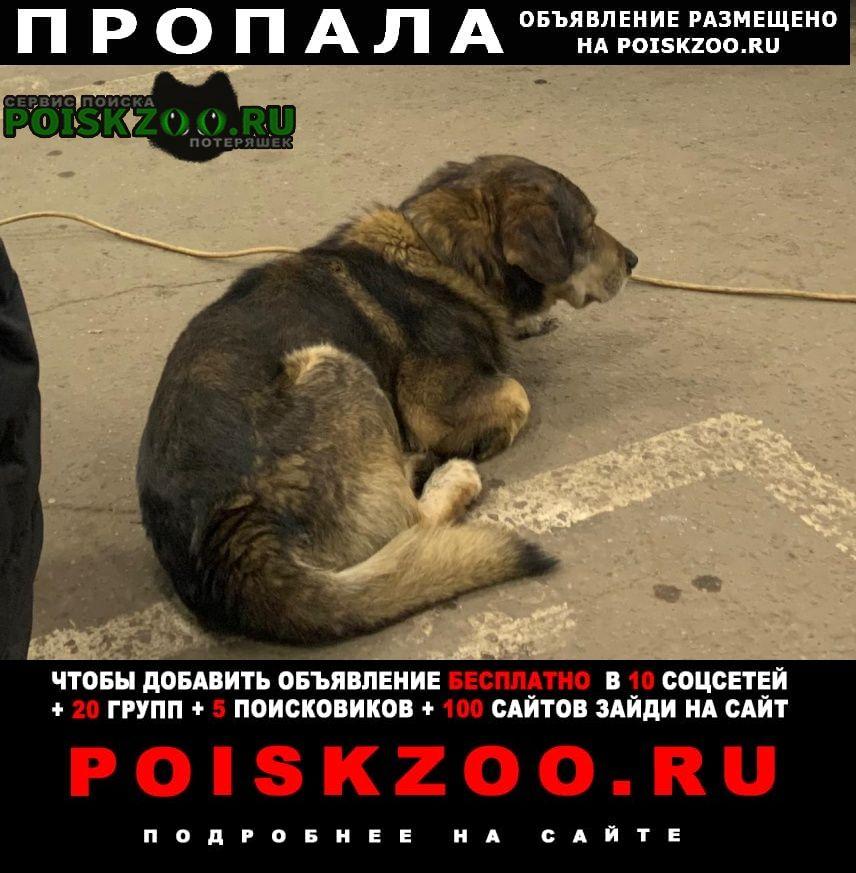 Пропала собака кобель, коричнево-ореховый окрас Москва