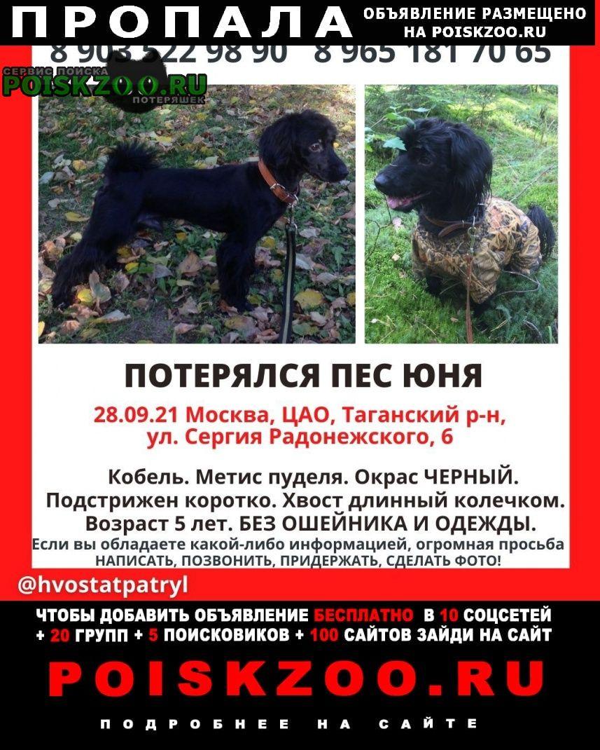 Пропала собака кобель пёс Москва
