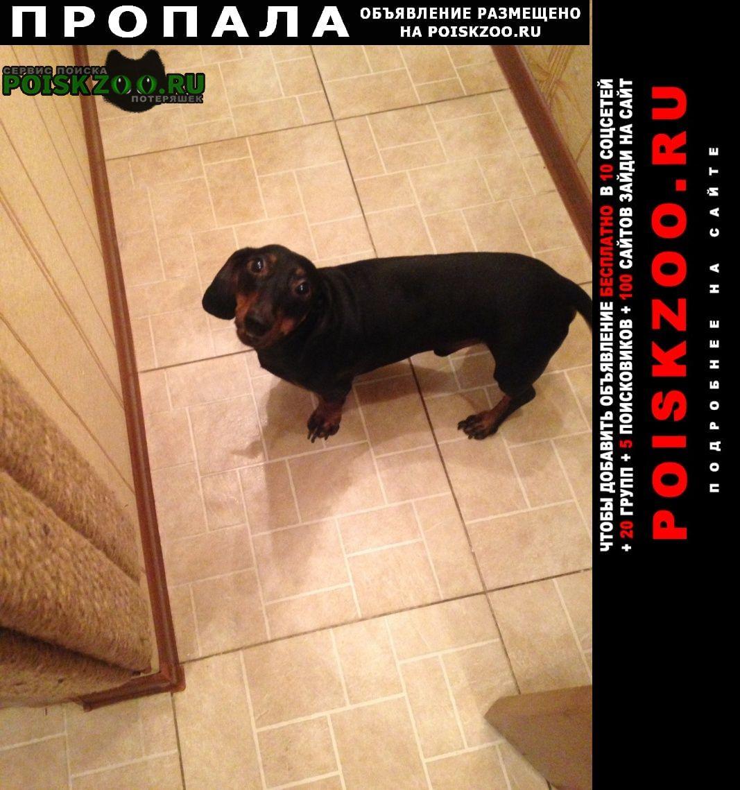 Пропала собака кобель сзао Москва