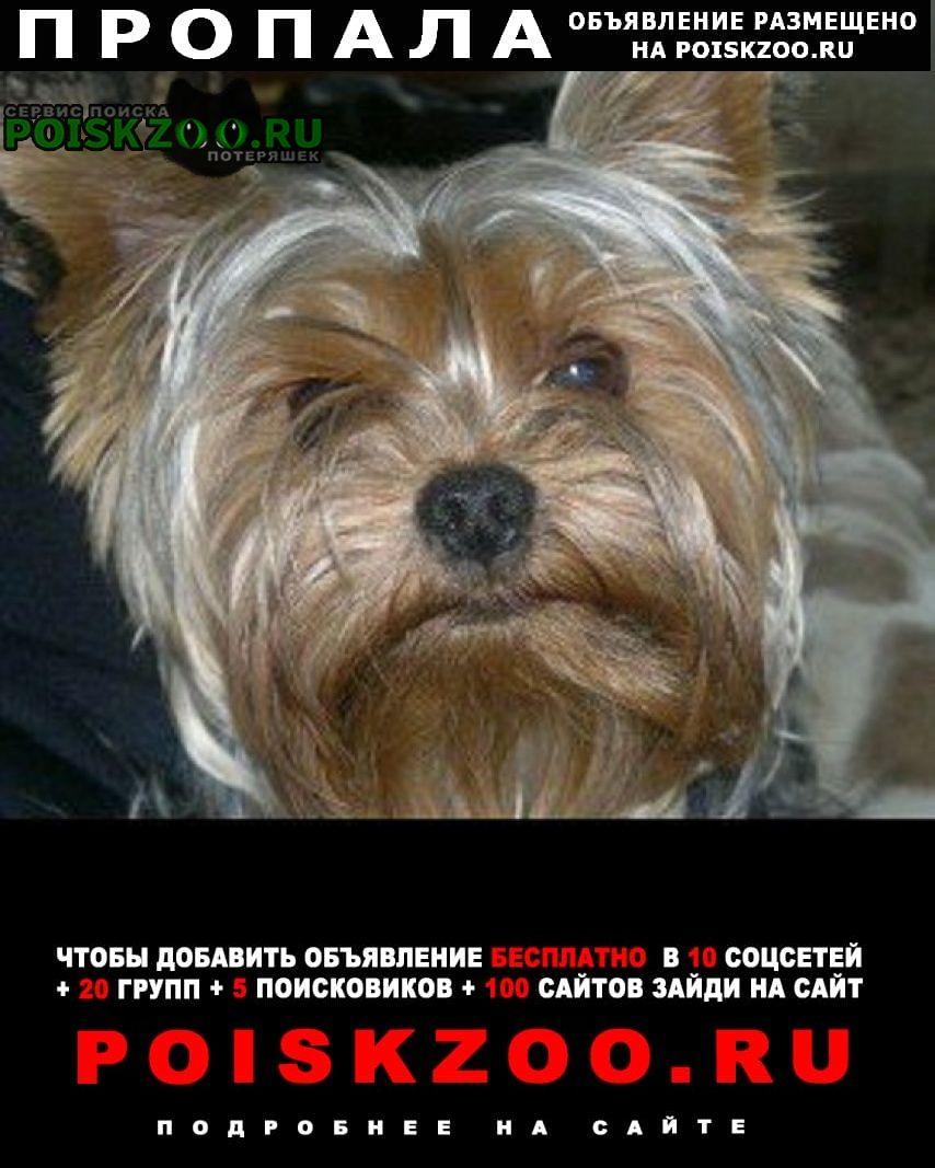 Зеленоград Пропала собака кобель мини йоркширский терьер мальчик