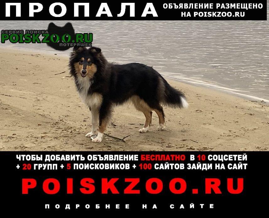 Пропала собака Пенза