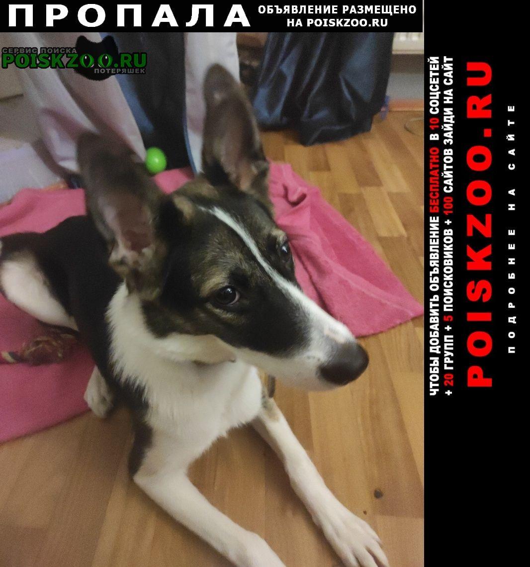 Москва Пропала собака белла 7 месяцев