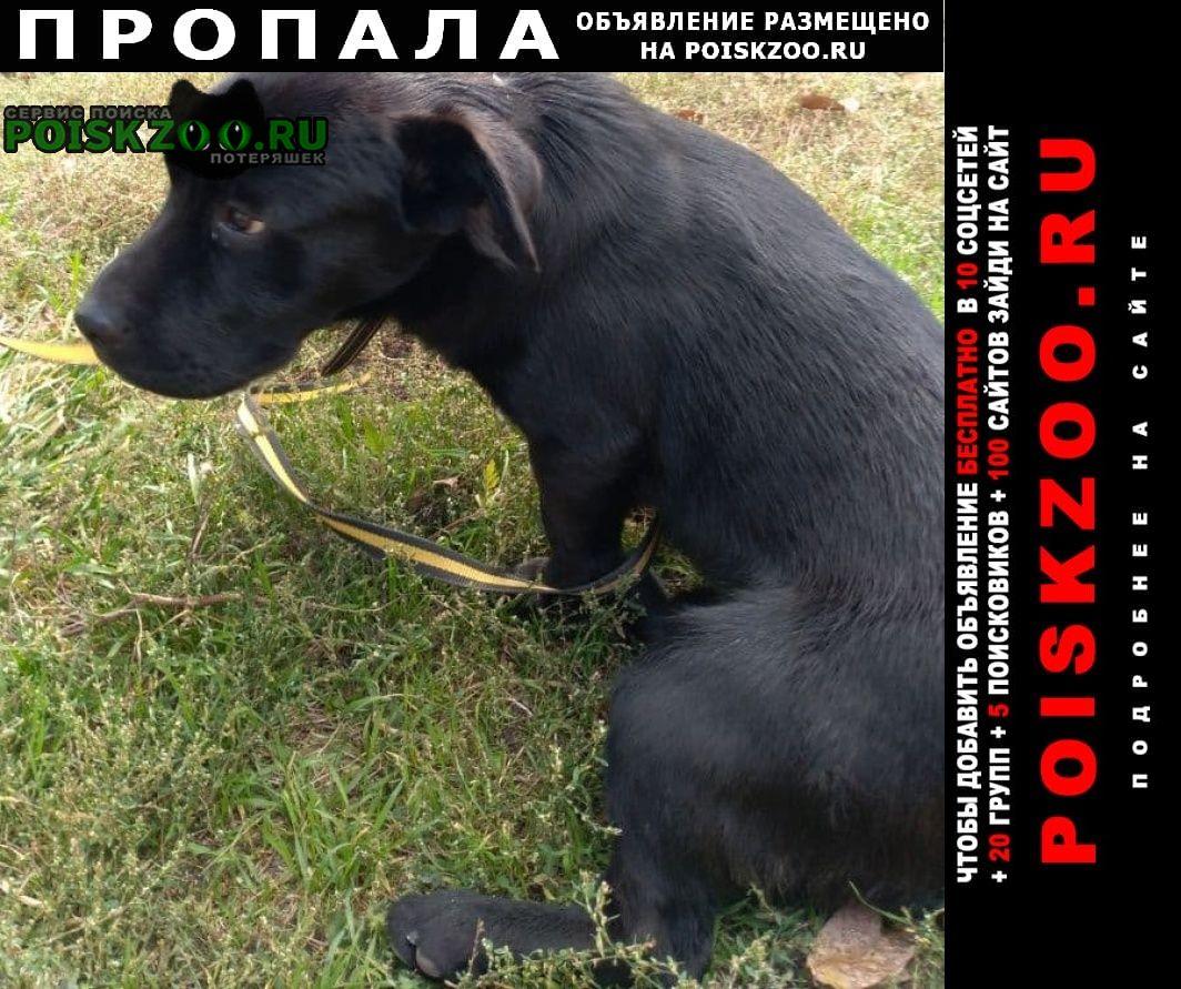 Пропала собака кобель с поводком, черный, залысина на шее Донецк Донецкая обл.
