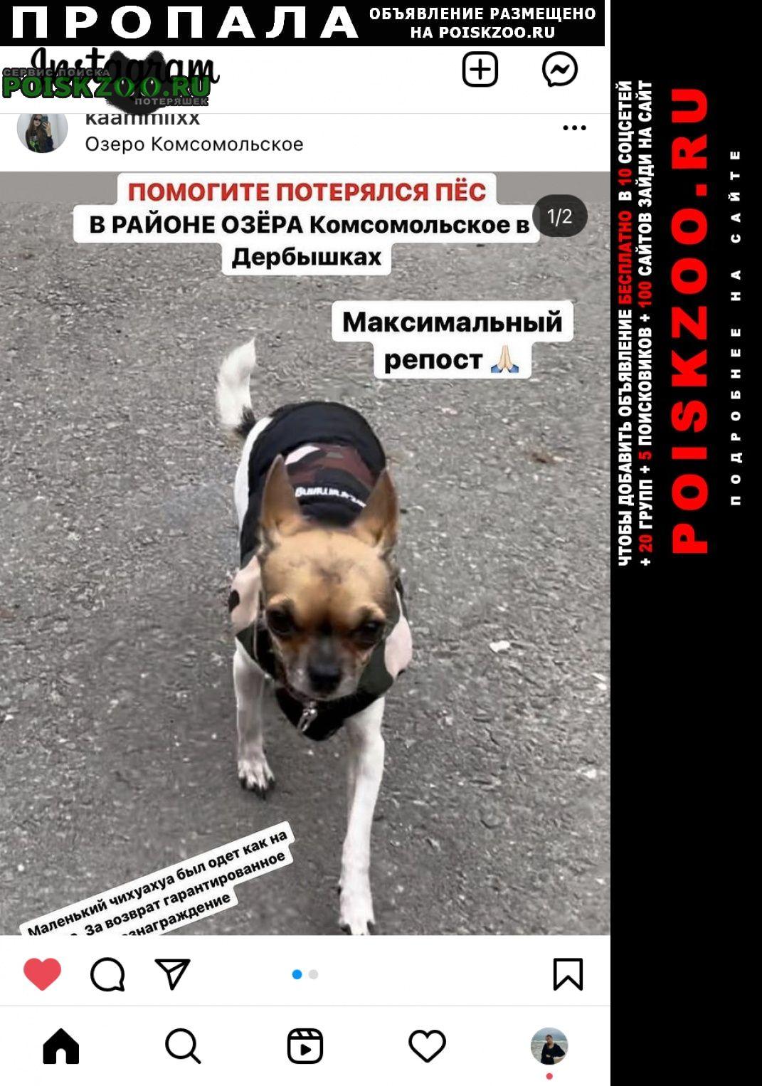 Пропала собака кобель маленький чихуахуа одет в куртку 3цветны Казань
