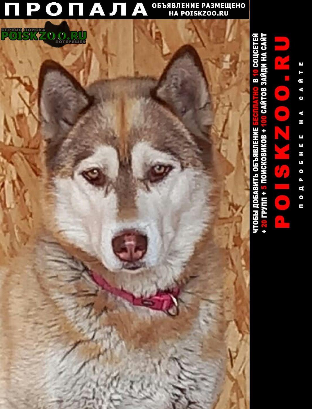 Челябинск Пропала собака
