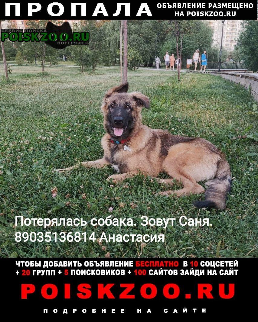 Москва Пропала собака кобель