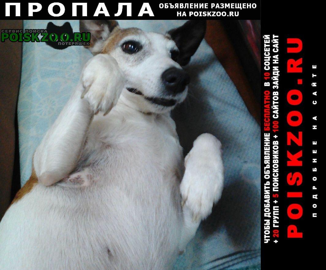 Белгород Пропала собака внимание