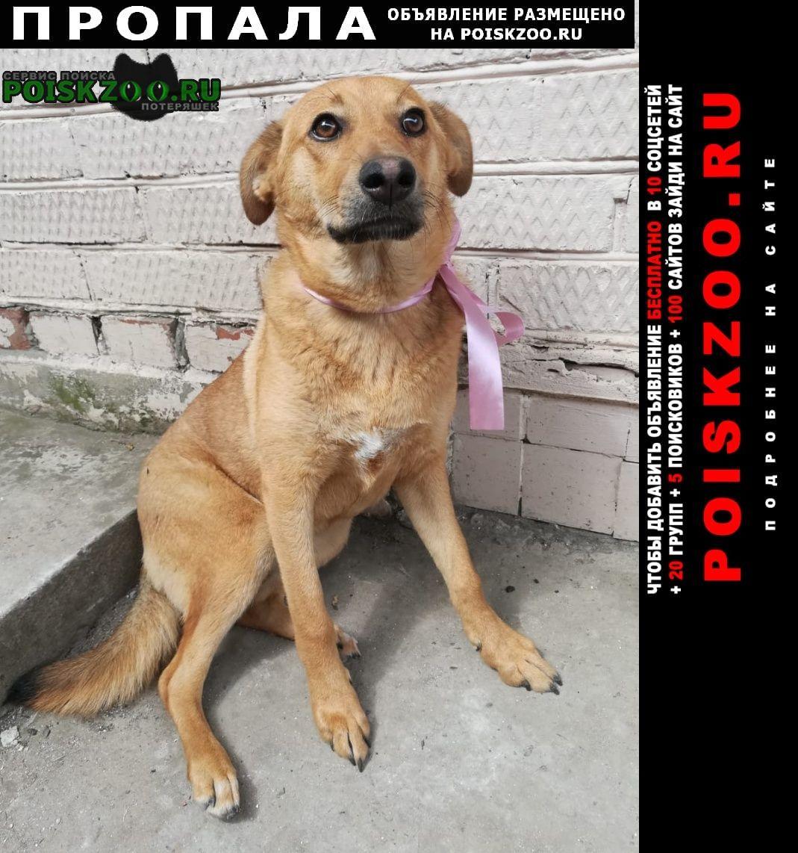 Пропала собака sos Краснодар