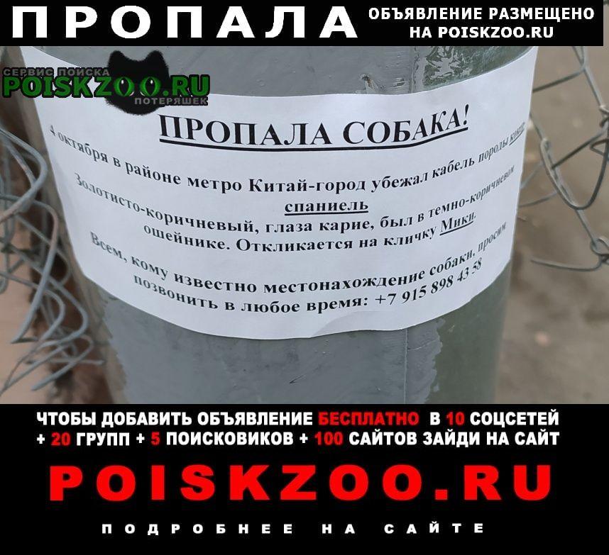 Москва Пропала собака кобель цао, китай-город, кокер спаниель