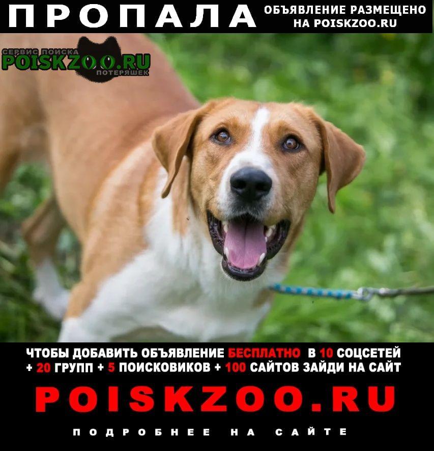 Пропала собака кобель Щелково