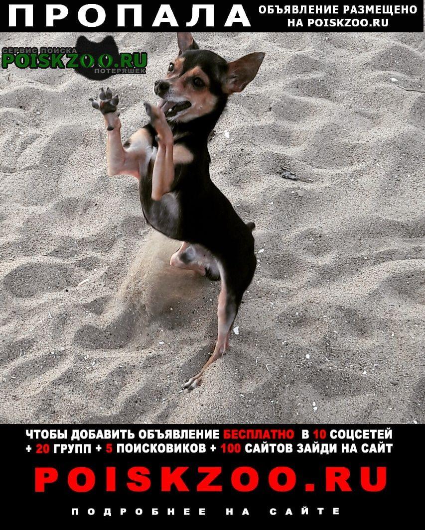 Владивосток Пропала собака кобель кабель 12 лет