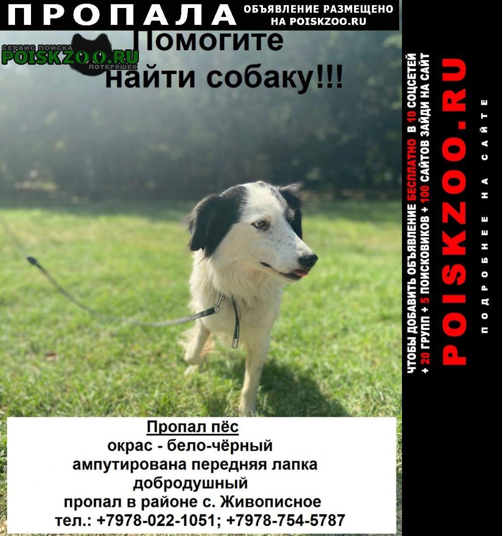Пропала собака кобель собаку виде вчера в перово/южное Симферополь