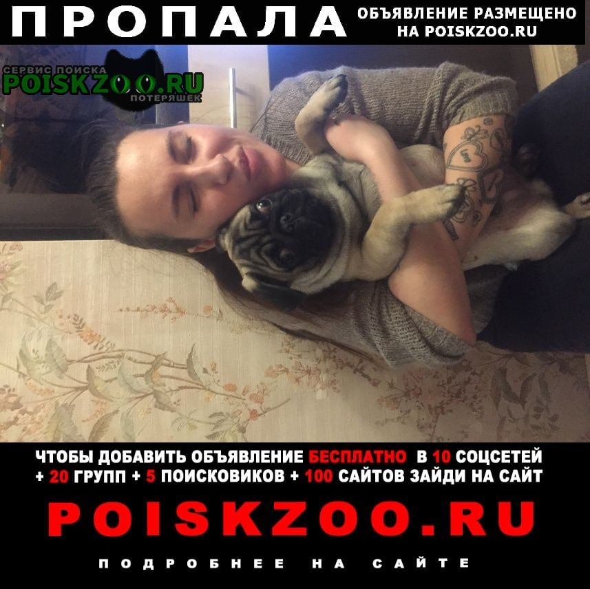 Дзержинский Пропала собака кобель