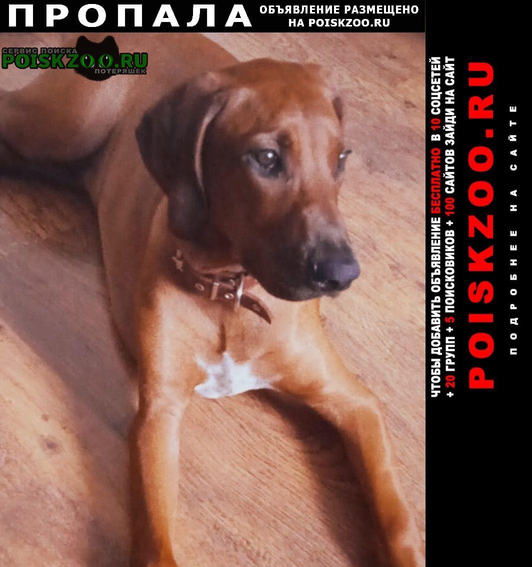 Пропала собака кобель дзержинский район Новосибирск