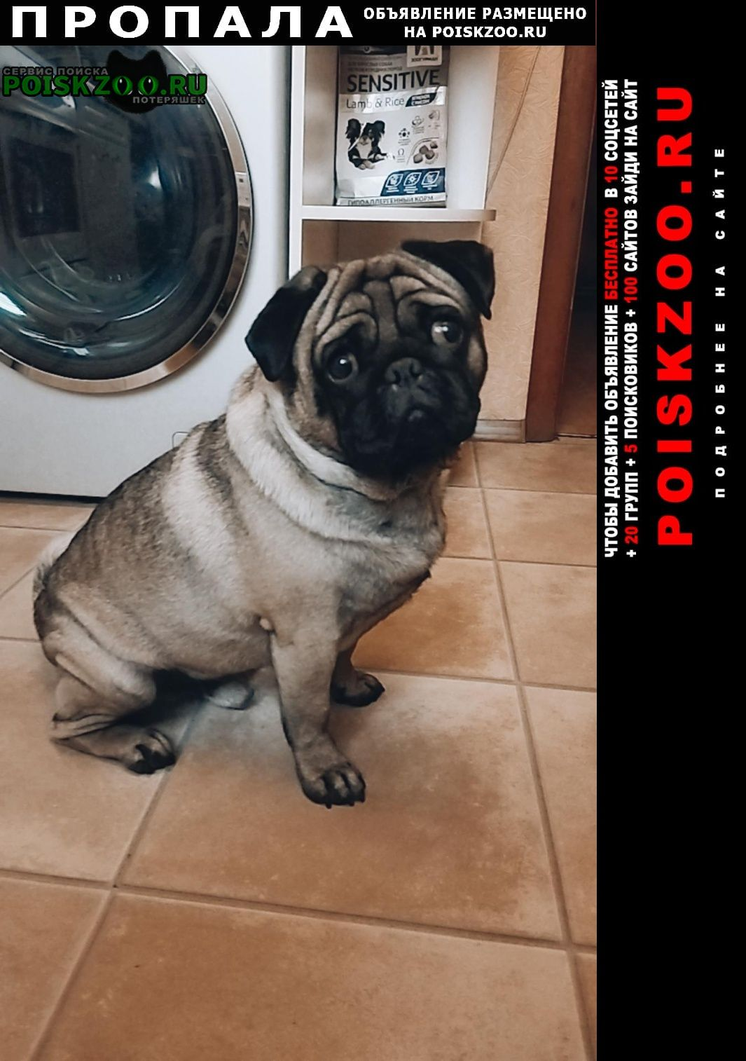 Пропала собака кобель помогите найти Дмитров