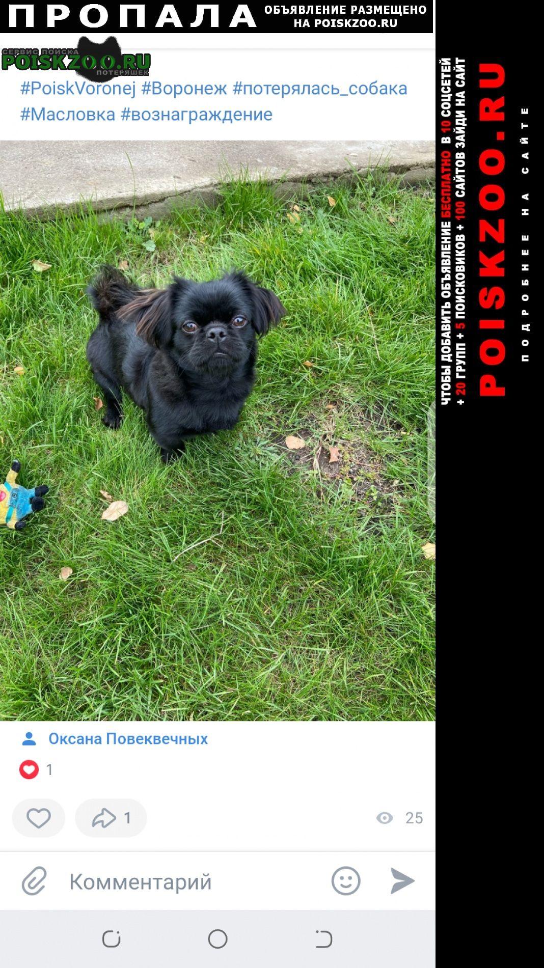 Пропала собака кобель пёс, в районе масловка в дачно Воронеж