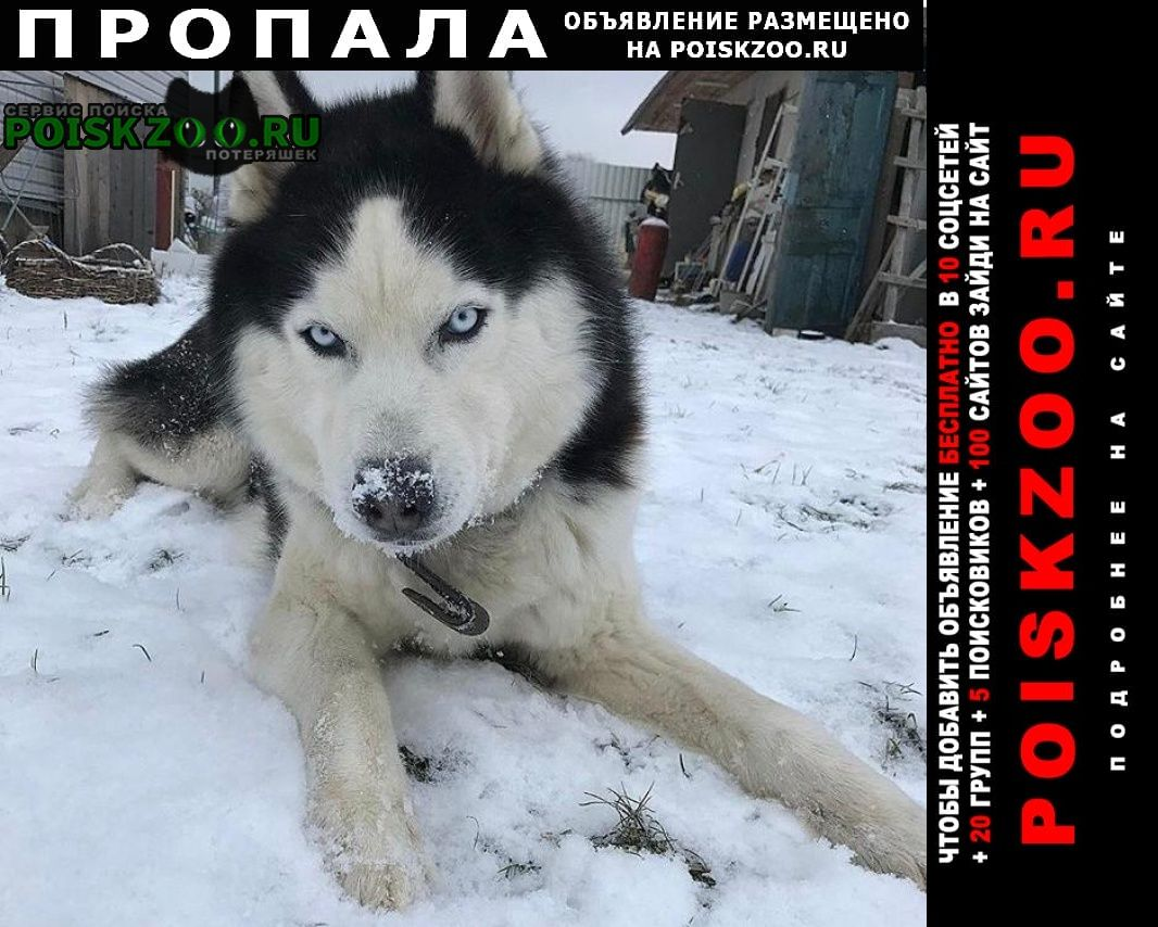 Пропала собака кобель Обнинск
