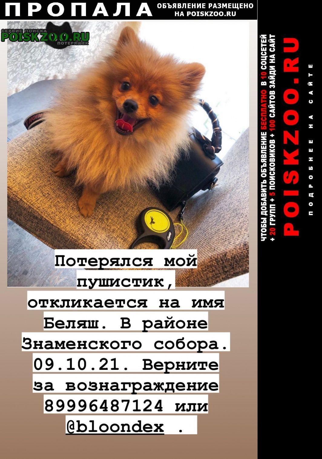 Кемерово Пропала собака кобель верните за вознаграждение