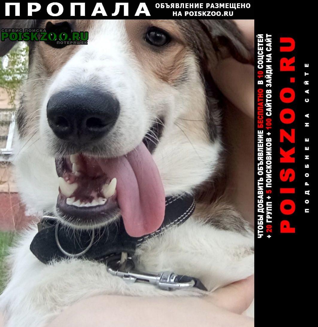 Нижний Новгород Пропала собака кобель пожалуйста помогите найти собаку