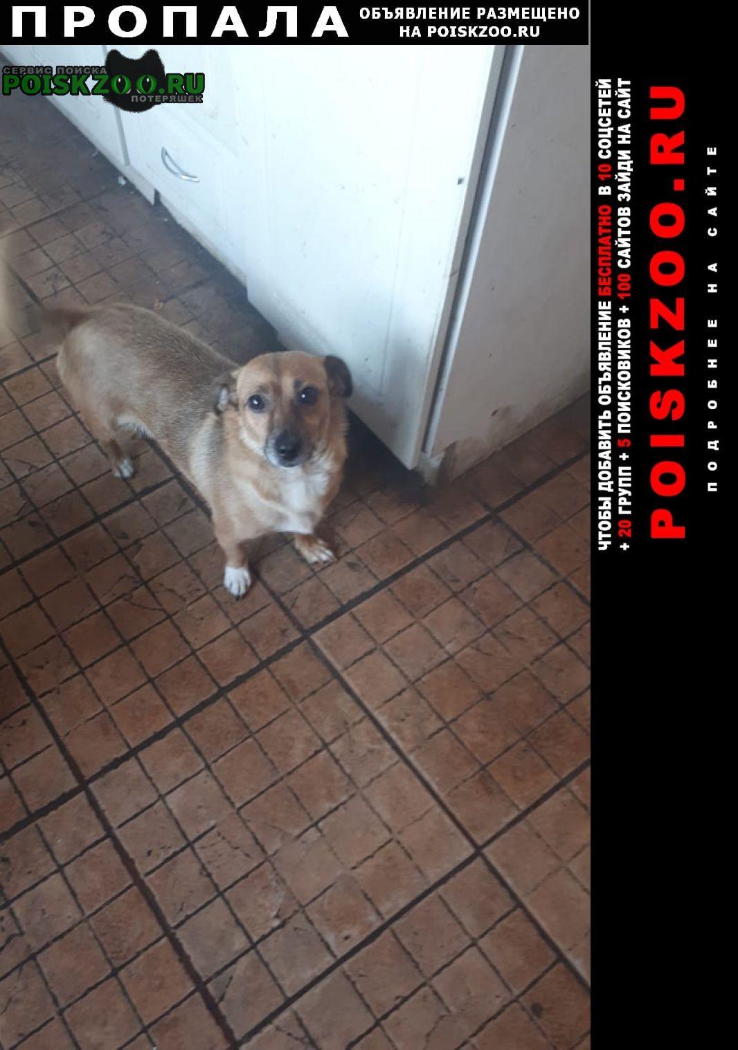 Ставрополь Пропала собака собачка