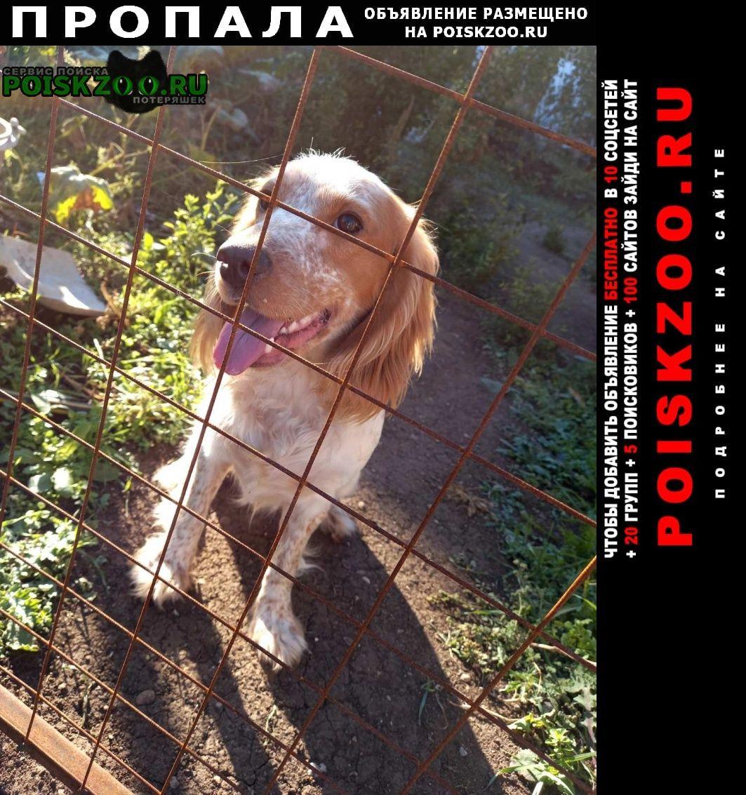 Пропала собака кобель Красногвардейское