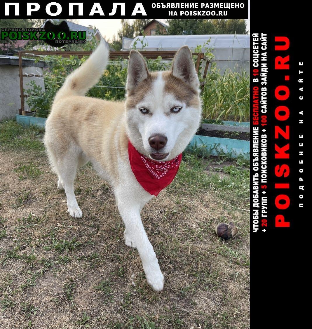 Пропала собака кобель Балашиха