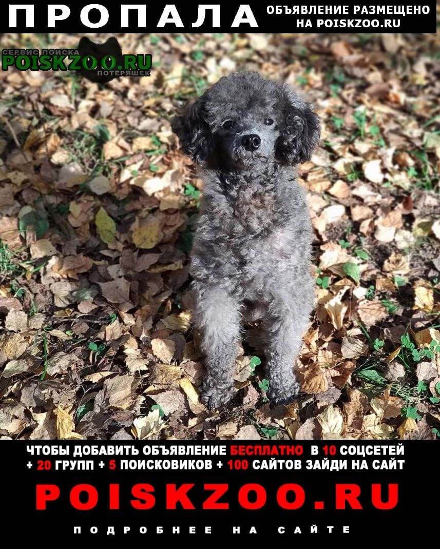 Ярославль Пропала собака кобель