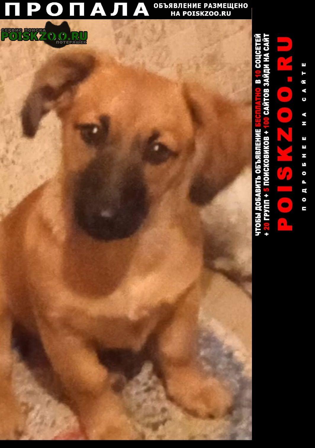 Пропала собака щенок Новосибирск