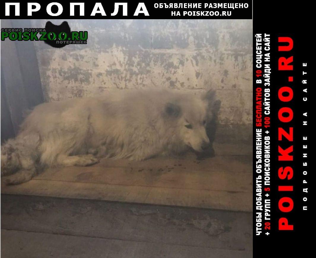 Алапаевск Пропала собака кобель