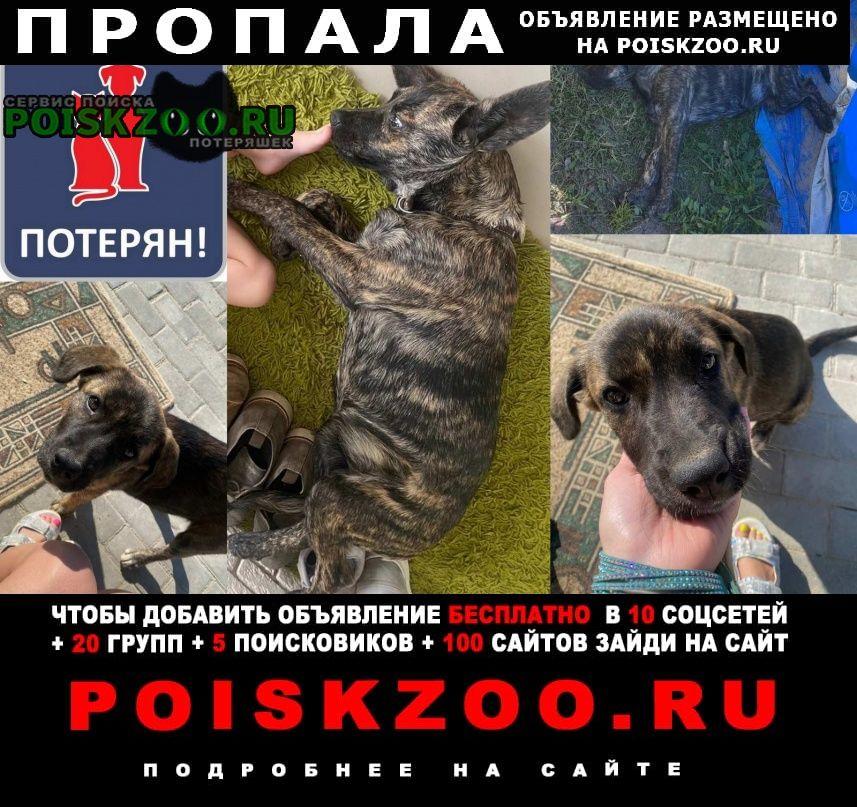 Калининград (Кенигсберг) Пропала собака
