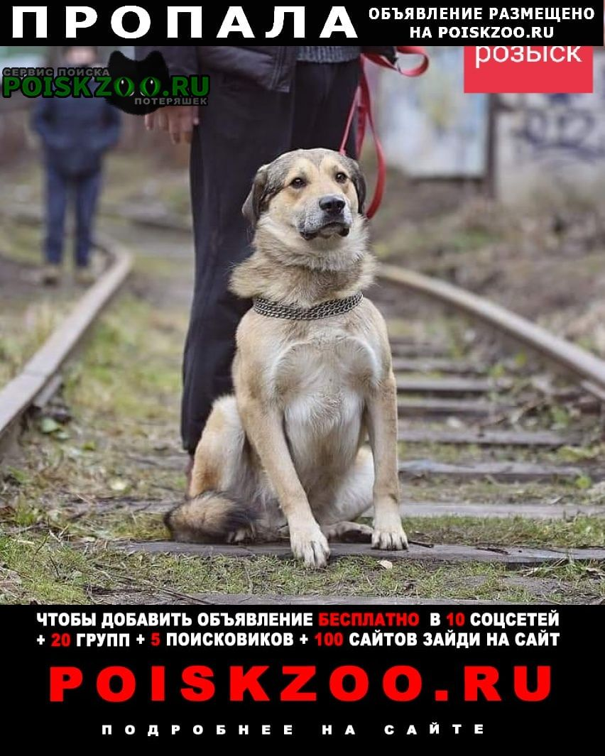 Пушкино Пропала собака кобель правдинский район