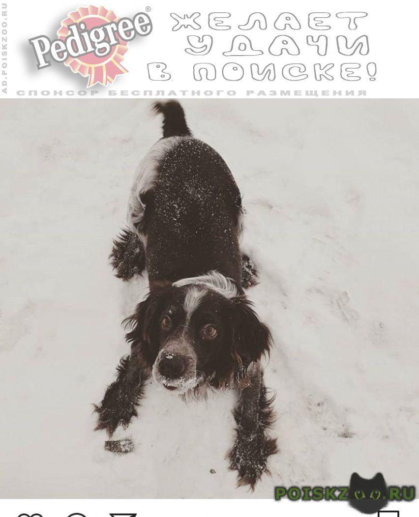 Пропала собака срочно г.Казань