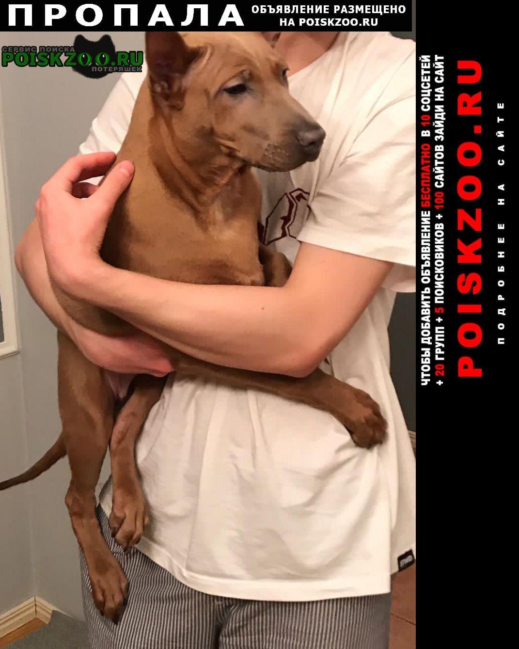Пропала собака, р-н марфино, останкино Москва