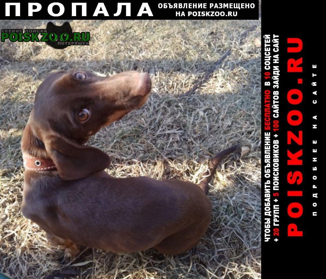 Пропала собака девочка Иркутск