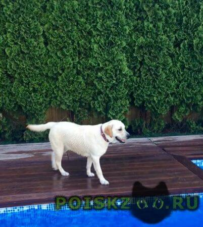 Пропала собака ищем лору г.Краснодар