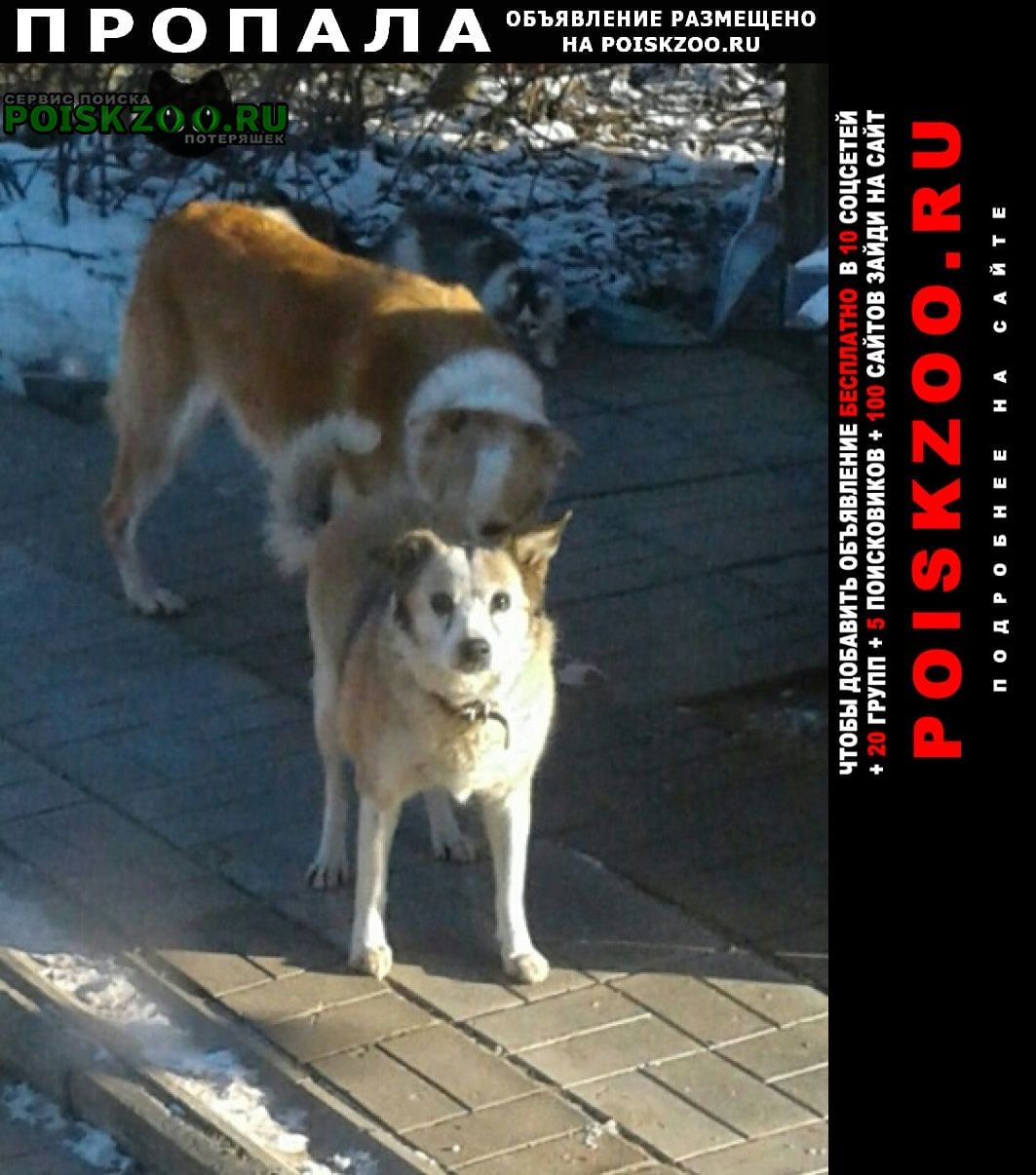 Пропала собака кобель Кубинка